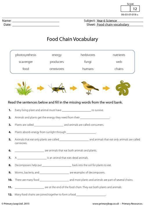 PrimaryLeap.co.uk - Food Chain Vocabulary Worksheet   Food ...