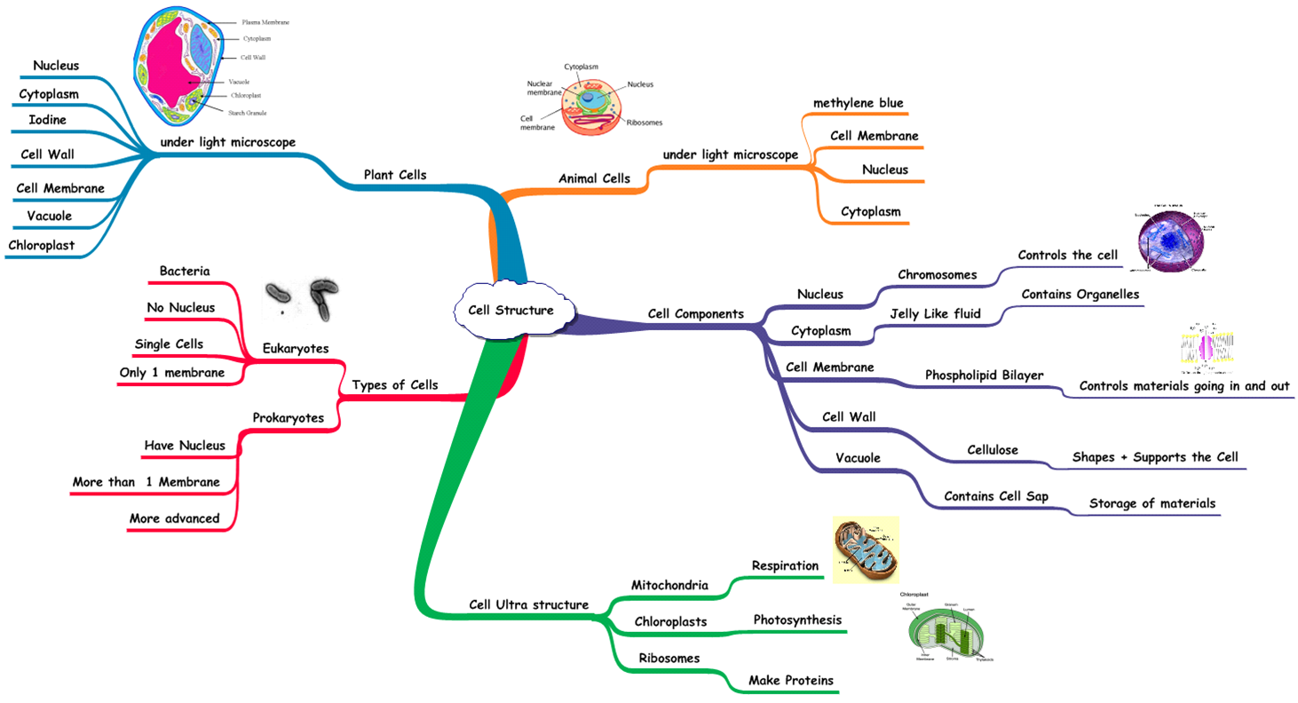 Mind Map Of The Nervous System