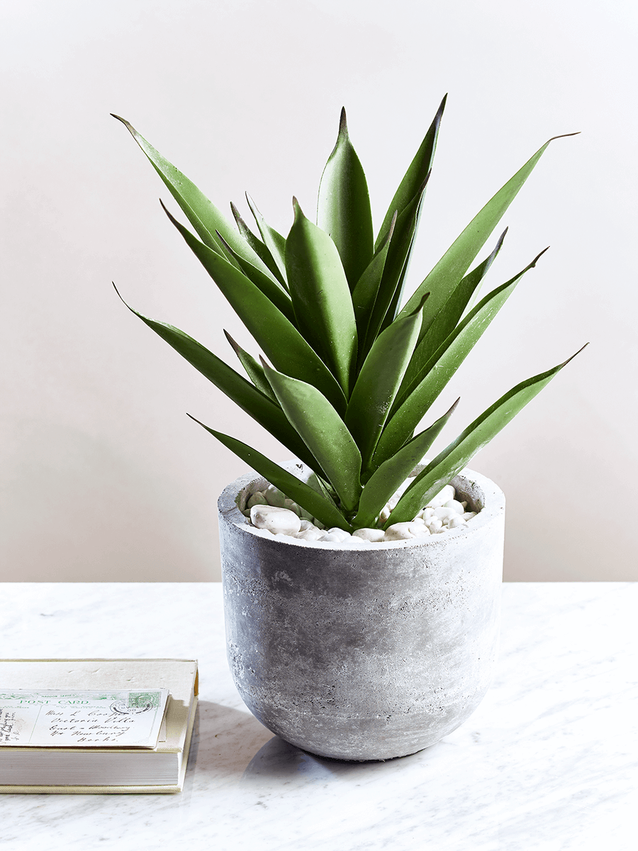 Large Faux Potted Aloe