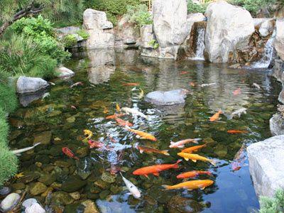 How To Build A Pond Garden Pond Design Pond Design Ponds Backyard