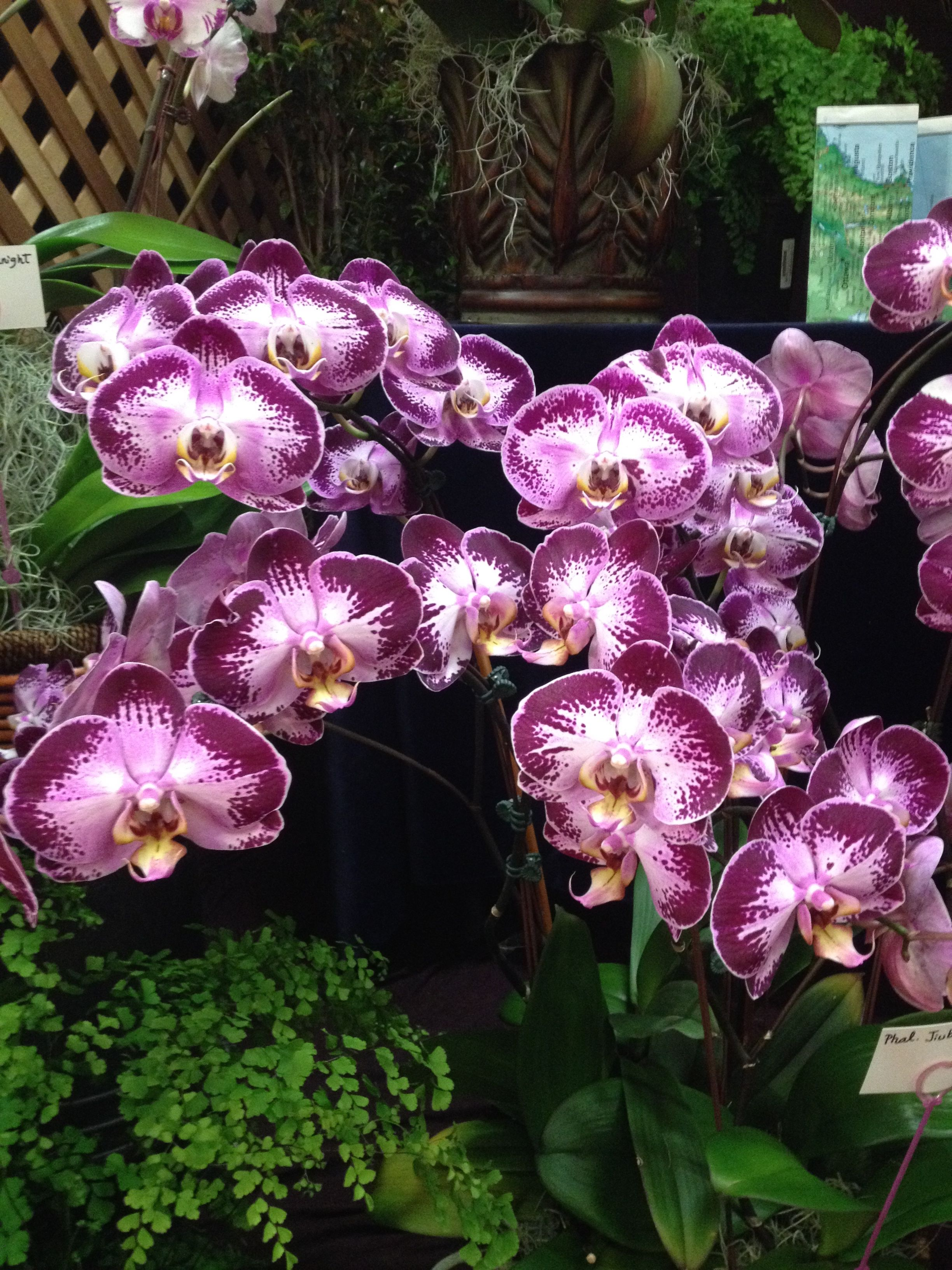 We Loved This Orchid Display At The Orchid Show You Gift We Give