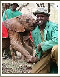 david sheldrick wildlife trust @ Kenya