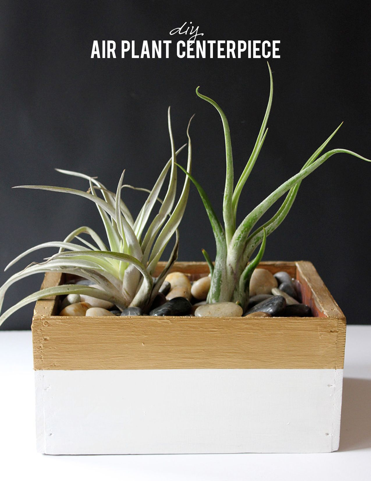 DIY Air Plant Centerpiece Plant centerpieces, Air plants