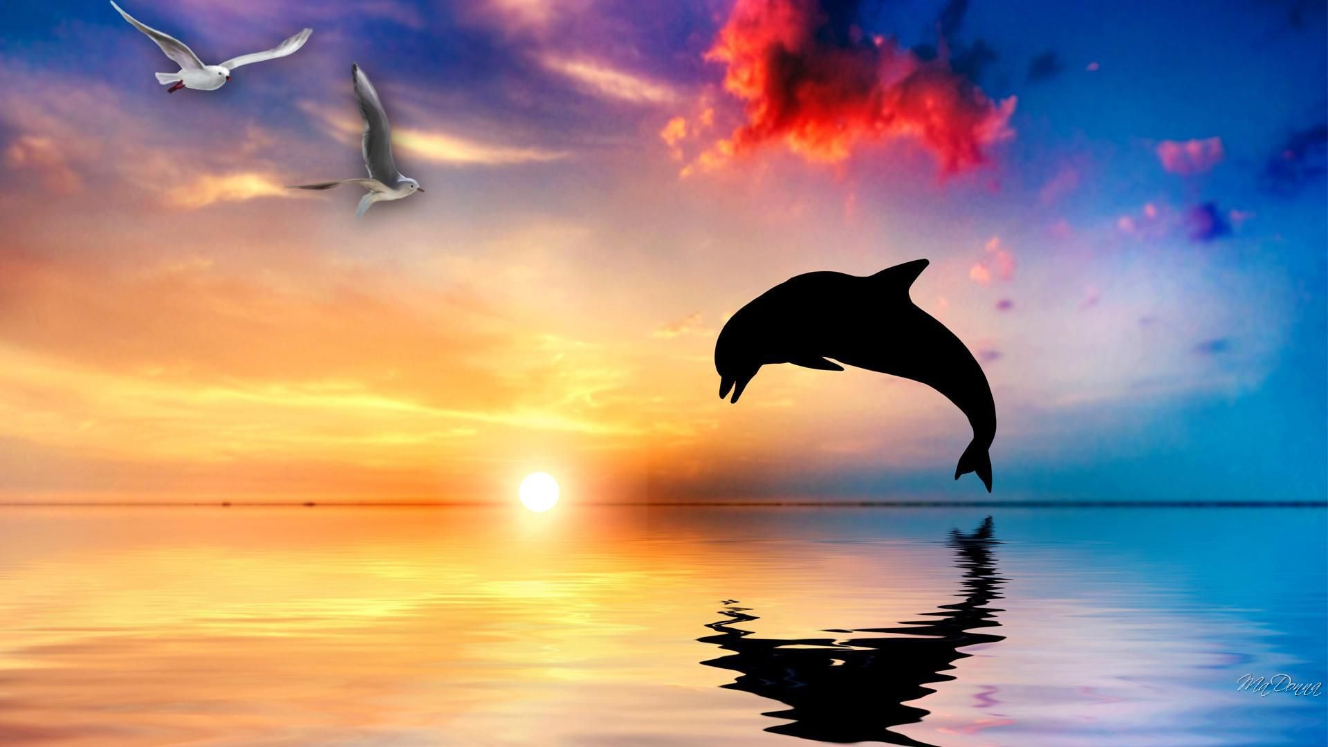 Dolphin Wallpapers, Images, Photos, Pictures & Pics #dolphin ...