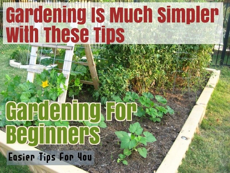 da8fb7acd46bf05129d07419dce4f6d0 - What Are The Basic Gardening Techniques