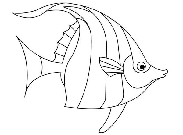 Flame Angelfish Fish Coloring Page Animal Coloring Pages Fish Drawings