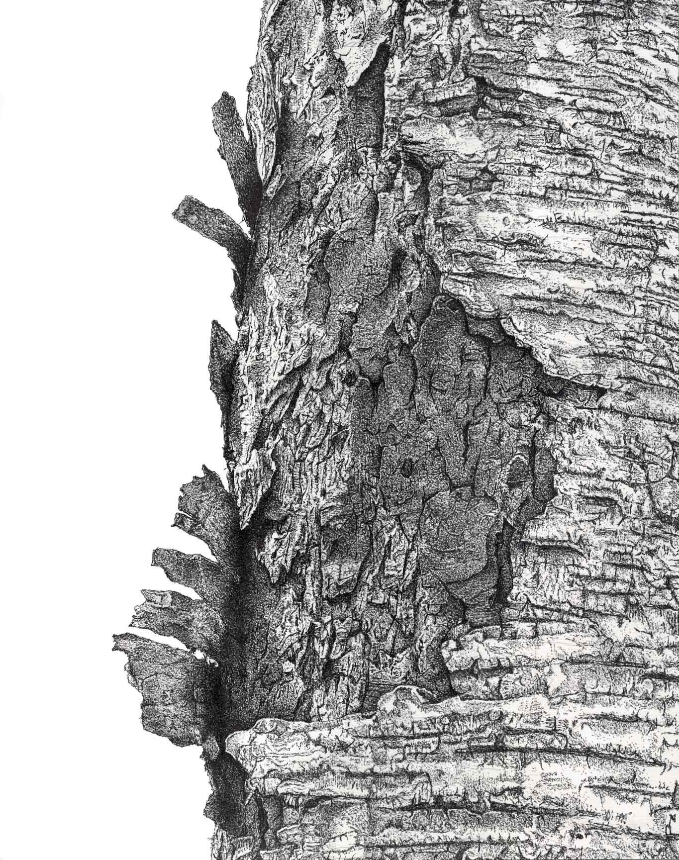 картинка кора деревьев на прозрачном фоне челябинске