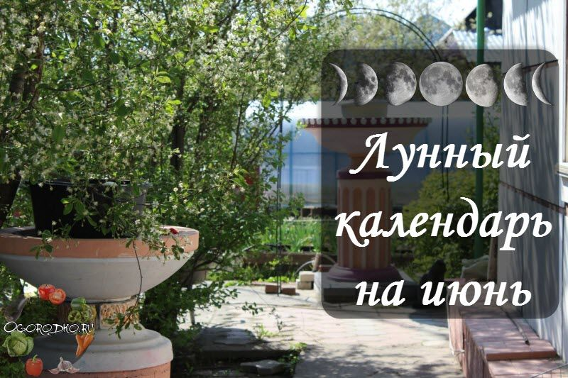 Лунный посевной календарь на июнь 2017 года, садовода огородника – благоприятные и неблагоприятные дни в июне, лучшие дни для посадки