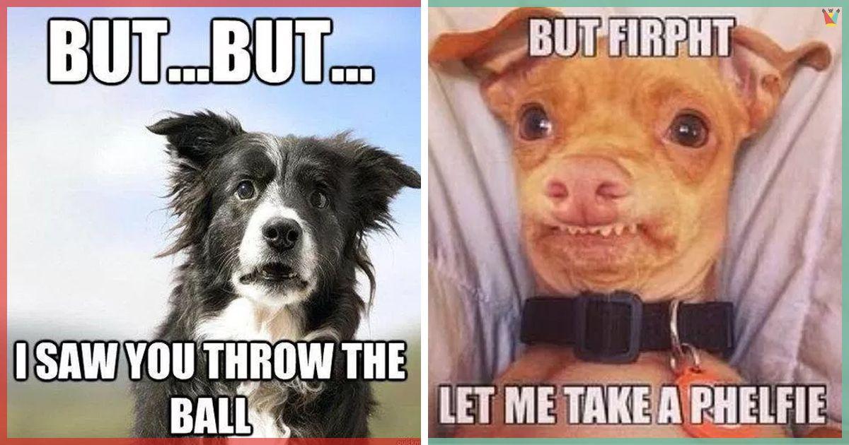 The Best Friend Dog Memes Clean Dog Memes Dog Best Friend Quotes