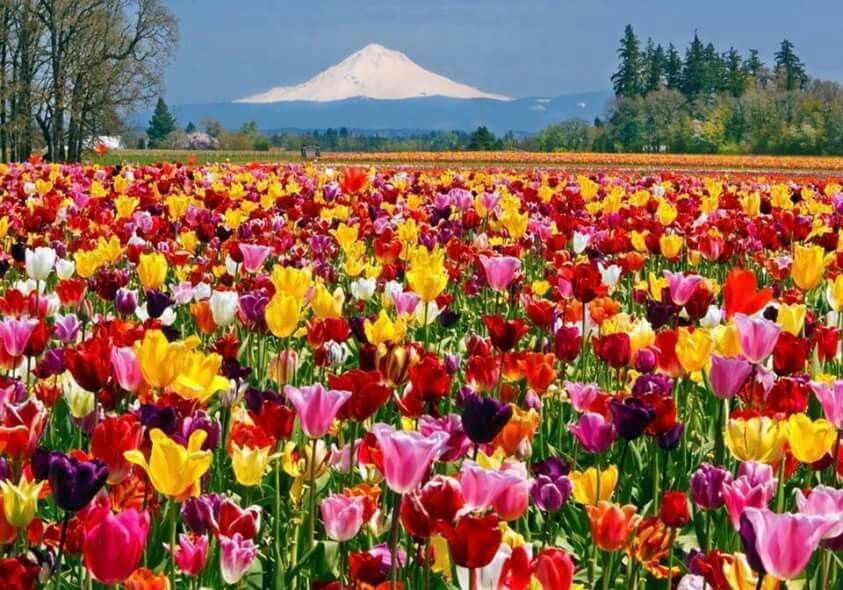 Image result for Spring in Washington State