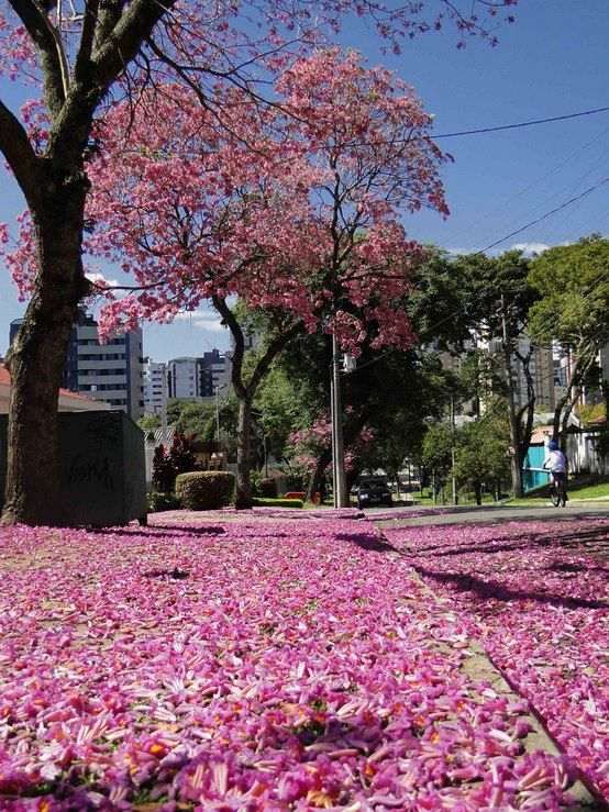 Curitiba, Paraná - Brazil