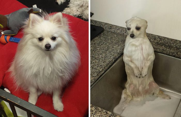 89 Funny Dog Pics Before And After A Bath Funny Dogs Funny Dog