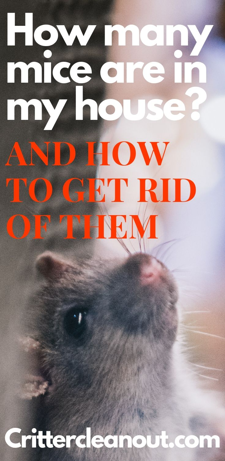 How many ratsmice are in my house getting rid of mice