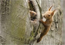 Afbeeldingsresultaat voor eekhoorns