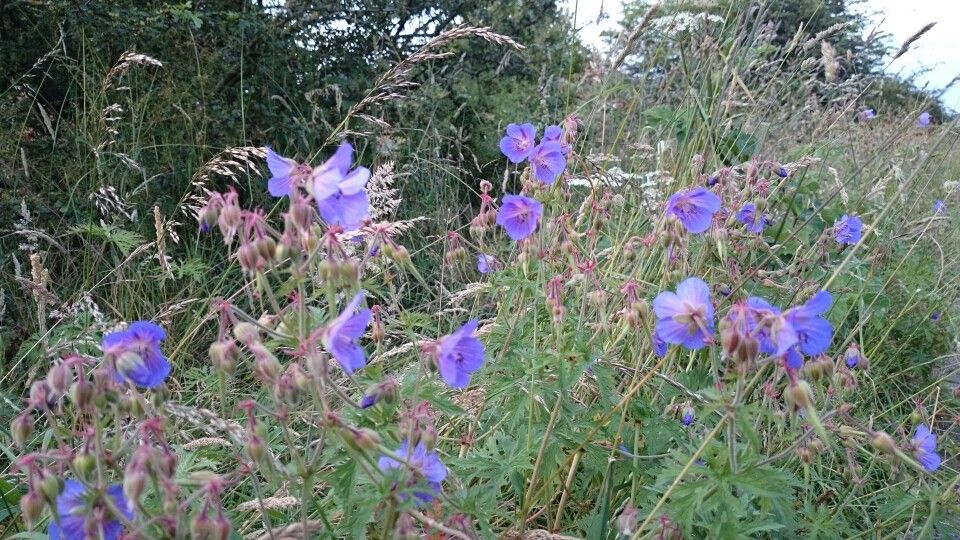 Some more wild flowers