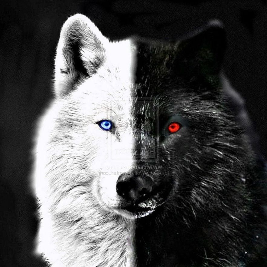 Black Wolf With Red Eyes Wallpapers Wolf Wallpapers Pro In 2020 Wolf With Red Eyes Eyes Wallpaper Wolf With Blue Eyes