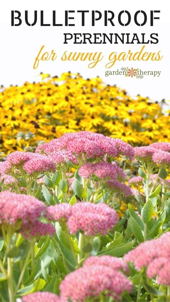 these-hardy-perennials-can-take-almost-anything-you-throw-at-them-but-maybe-not-bullets-579x1024-a5