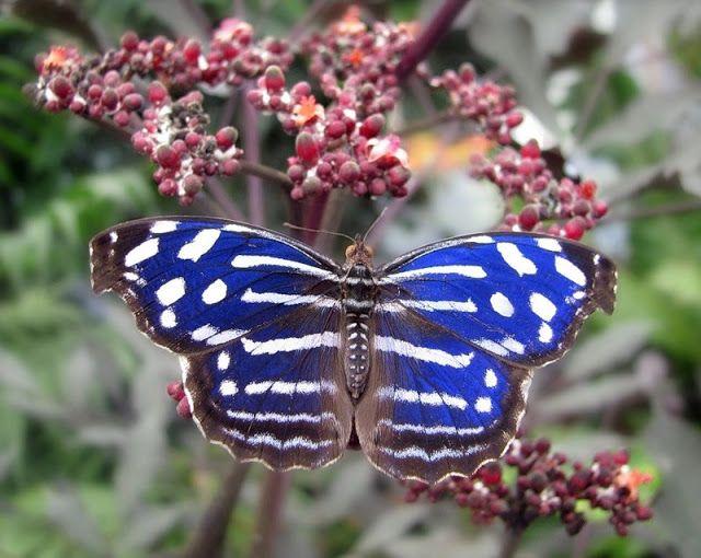 через объектив: Красивые фотографии бабочек   Бабочка ...