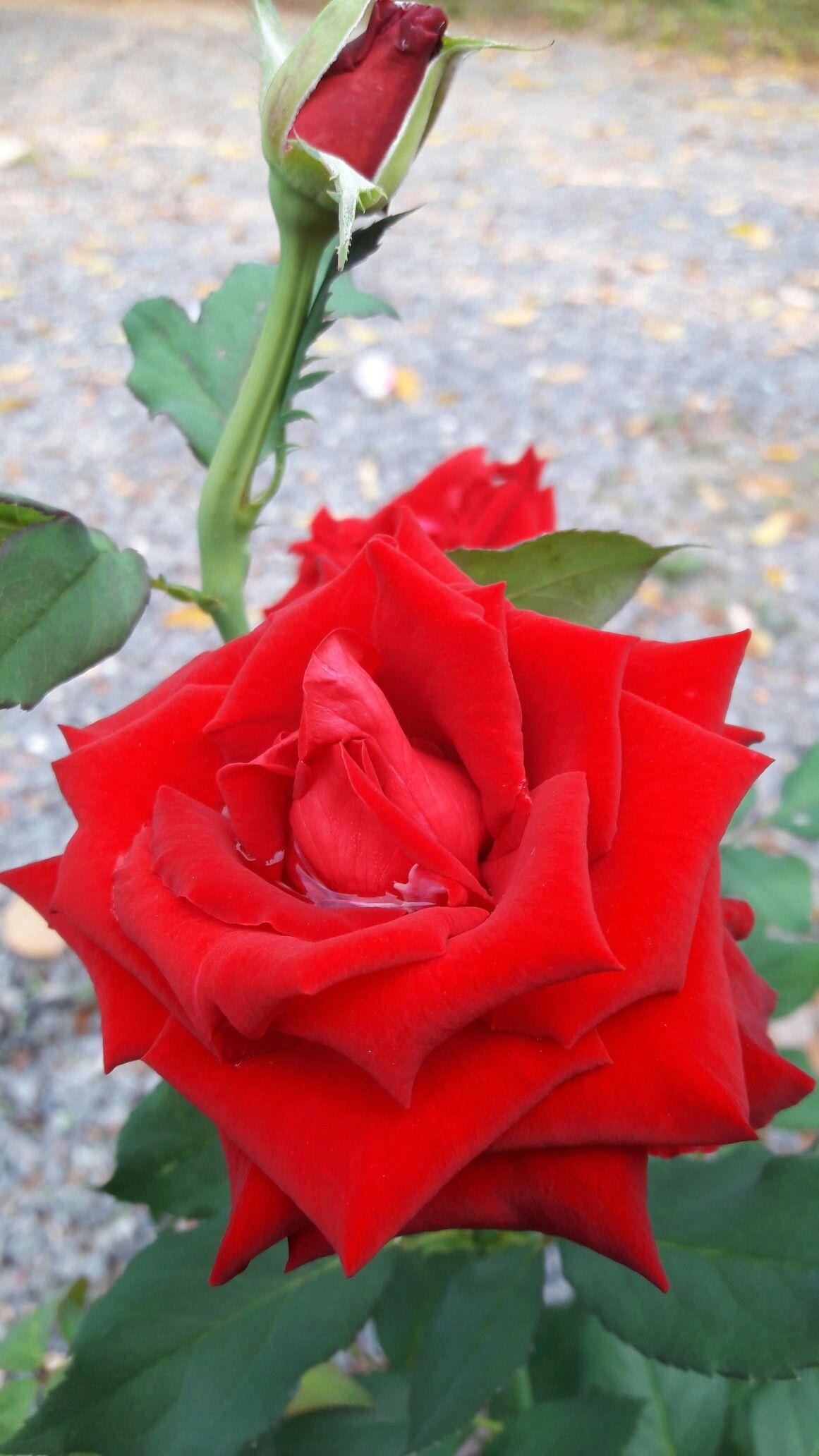 21 Flores exoticas rojas