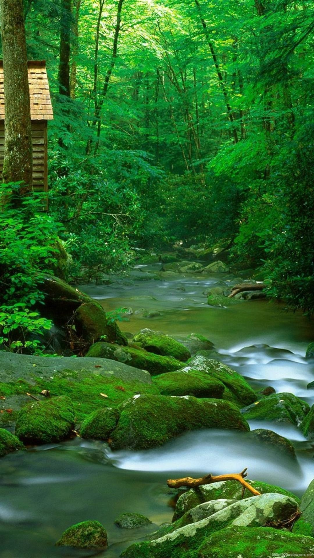 Nature Wallpaper For Android