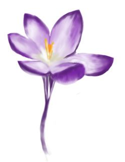 9bd7a676d99da Crocus drawing Fabric Painting, Watercolour Painting, Watercolor Tattoo,  Watercolors, Name Paintings,