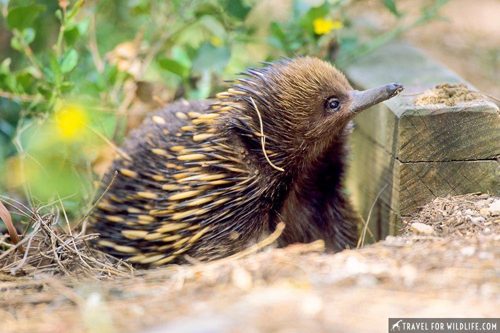 Where to see Native Australian Animals an Epic Australia