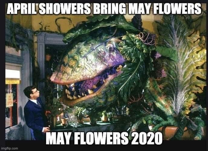 Lol May Flowers Funny Text Memes Funny Relatable Memes Stupid Funny Memes