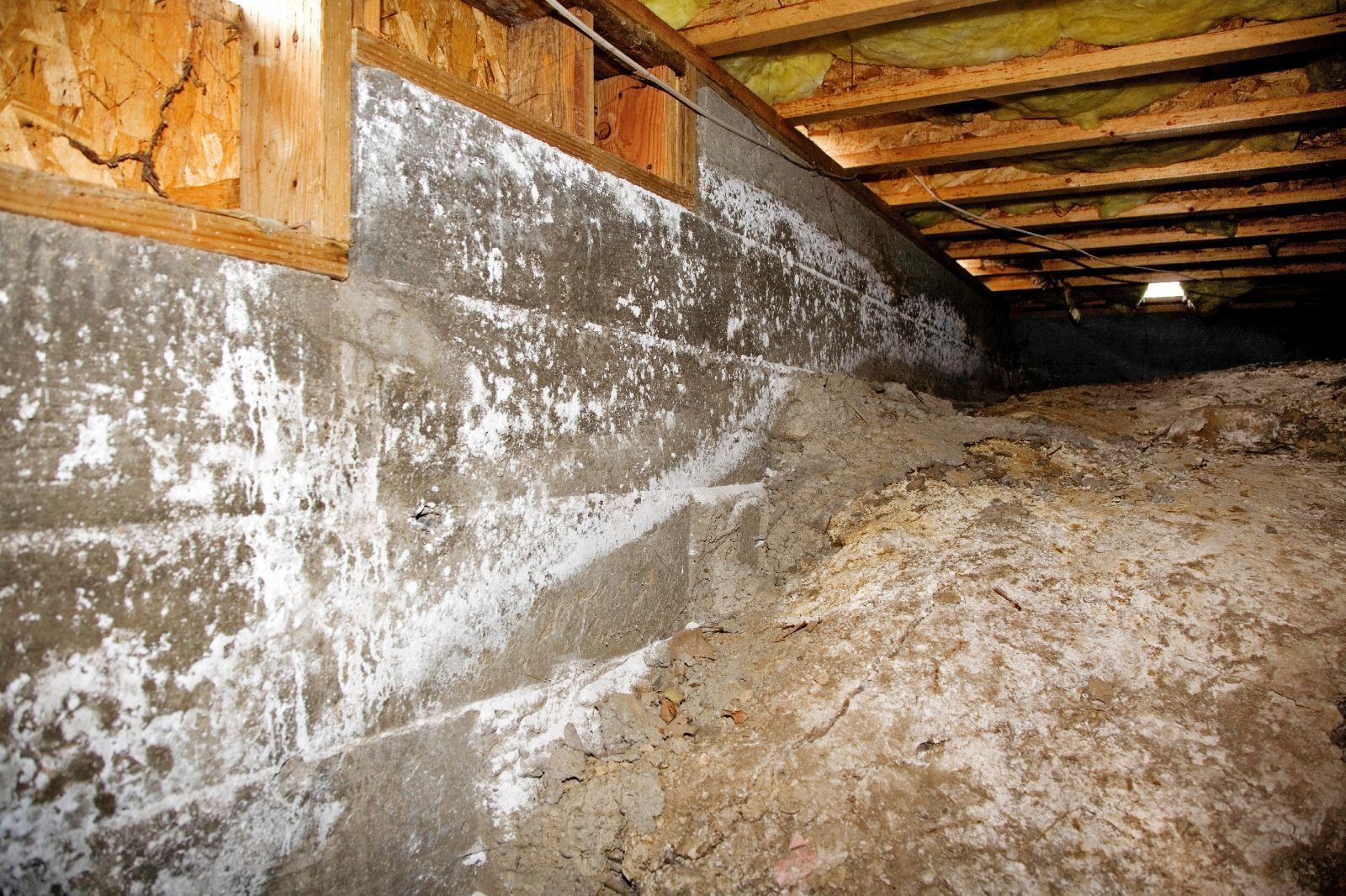 Mold Damage Repair Remediation Scavello Restoration Services Crawl Space Repair Mold In Basement Water Damage Repair