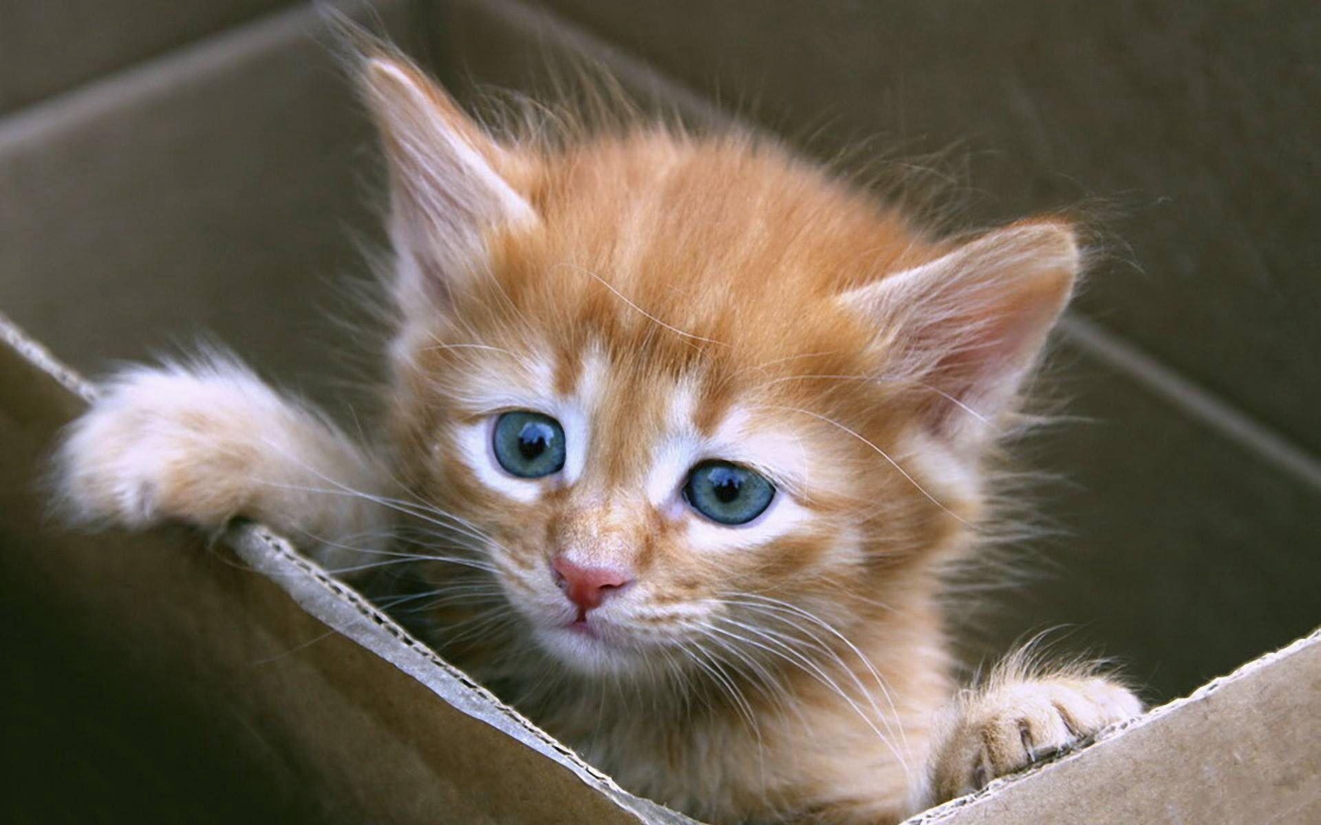Pin By Talking Smooth Jazz On Favorite Animal Cats Kittens Kittens Cutest Kittens Cute Cats