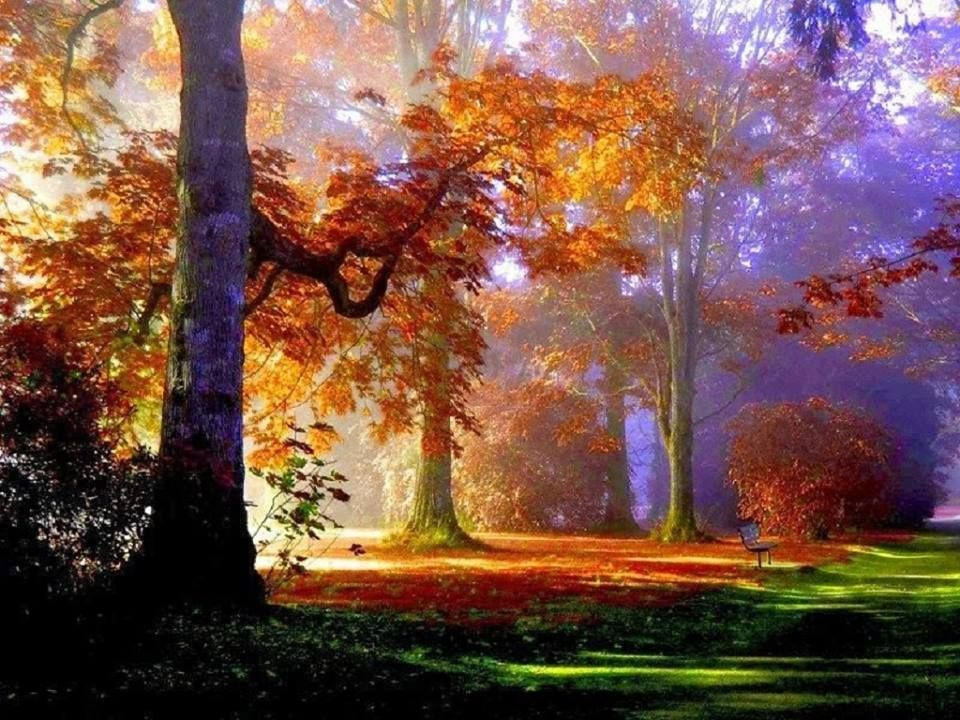 Paisajes otoales Beauty of Autumn Pinterest Forest wallpaper