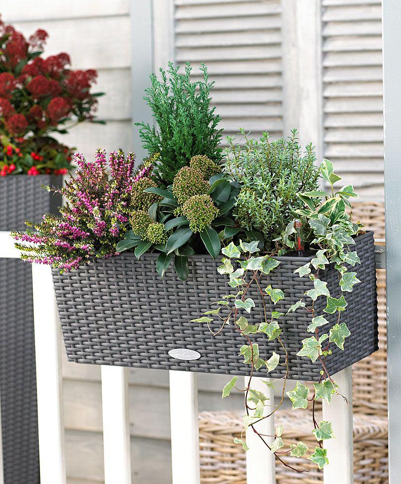 Plante pour jardiniere for Plantes pour jardin anglais
