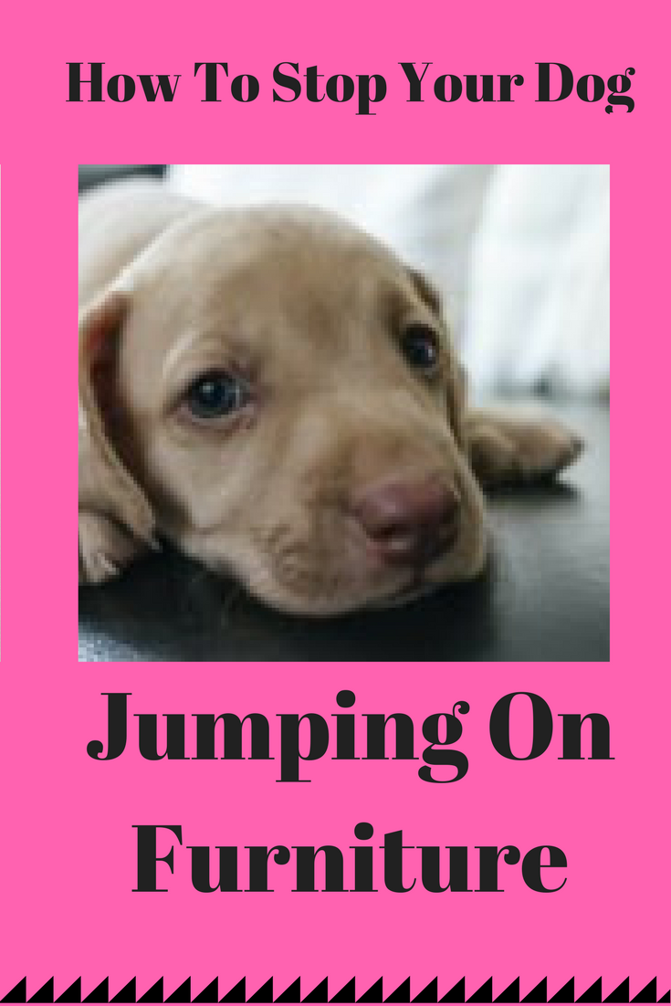 How To Stop Your Dog From Jumping On The Furniture Dog Training Obedience Dog Training Dog Clicker Training