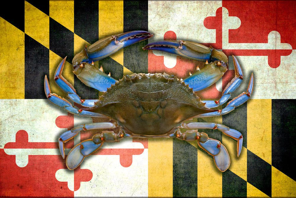 Framed Quilled Maryland Blue Crab made in the Colors of the Maryland State Flag