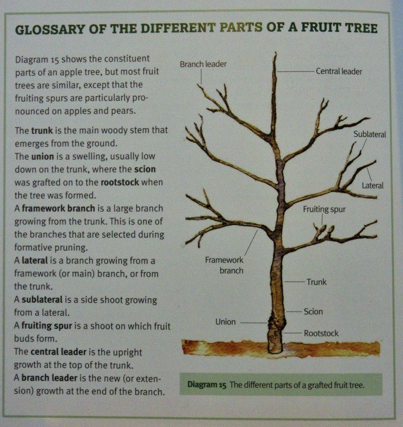 Fruit Tree Parts