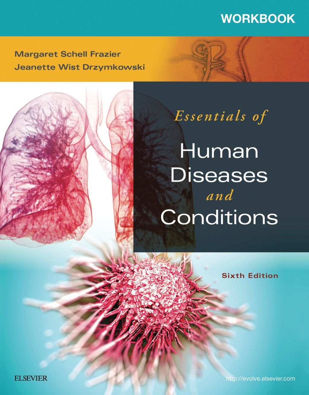 Workbook For Essentials Of Human Diseases And Conditions Ebook Rental Workbook Labeling Activities Free Workbook