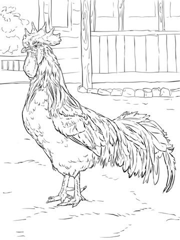 Brown Leghorn Rooster Coloring Page From Chicken Category Select 20946 Printable Crafts Of Cartoons Nature Animals Bible And Many More
