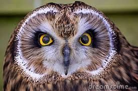 Image result for owl face