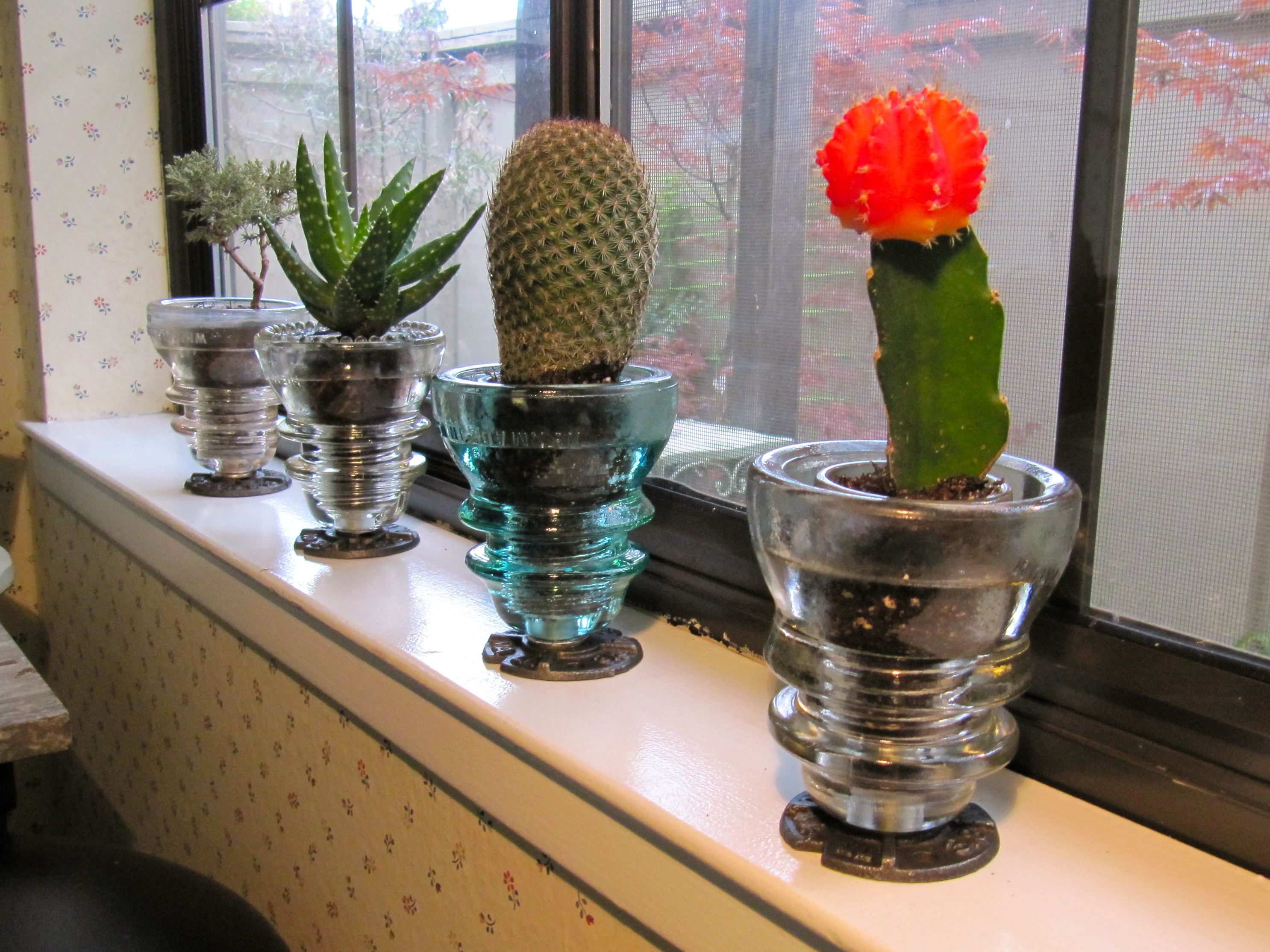 Cacti Amp Bonsai On A Window Sill For The Home