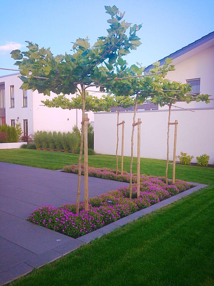 beet eingefasst in die terrasse mit platanen als sonnenschutz und storchenschn bel als. Black Bedroom Furniture Sets. Home Design Ideas