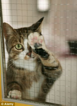Anger As Charities Sell Off Rescue Cats At Giant Pet Superstores After Years Of Campaigning Against The Sale Of Animals In Shops ねこ