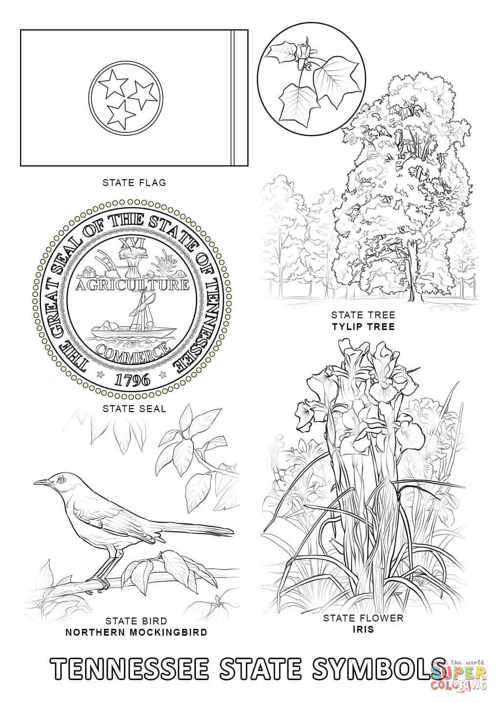 Tennessee State Symbols Coloring Page Free Printable Coloring Pages Flag Coloring Pages Flower Coloring Pages State Symbols