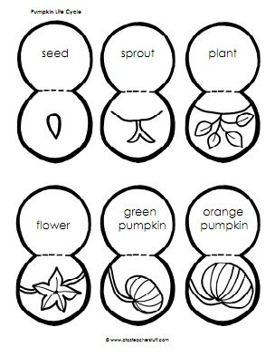 Pumpkin Life Cycle Sequencing Activity Printable and