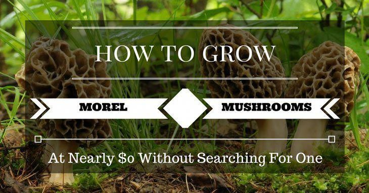A guide to how to grow morel mushrooms in your home garden