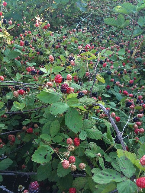 Blackberry Patch.  We used to pick berries, then go home, sprinkle them with sugar, and eat them!