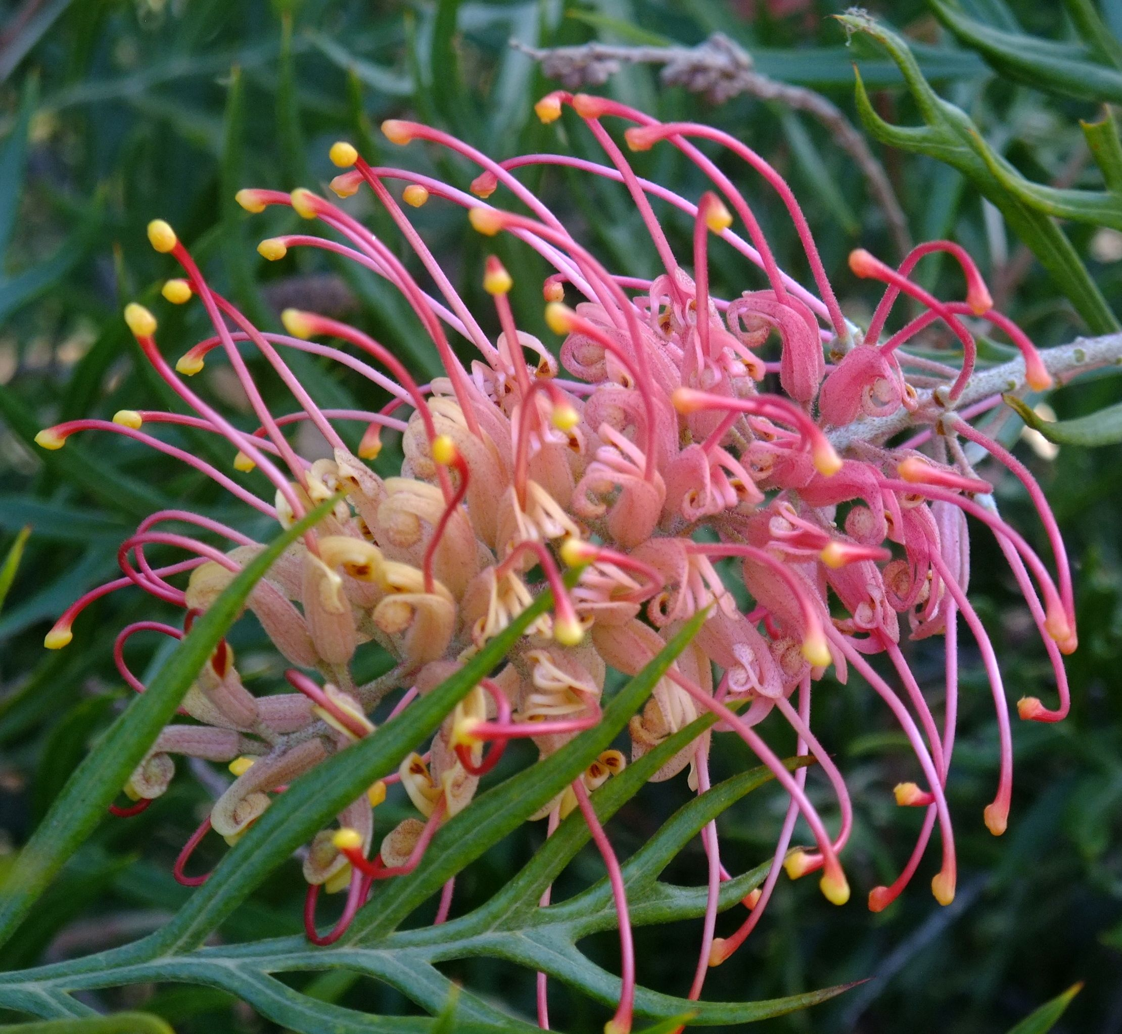 Australian Native Shade Plants: Gorgeous Native Australian Flora