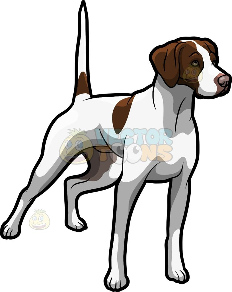 An Alerted German Shorthaired Pointer Pet Dog A Dog With White Short Fur And Several Dark Brown Spot Dog Animation Puppy Drawing German Shorthaired Pointer