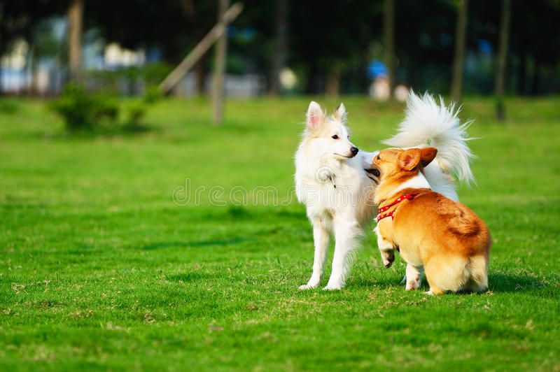 Two Dogs Playing Together In The Lawn Sponsored Dogs
