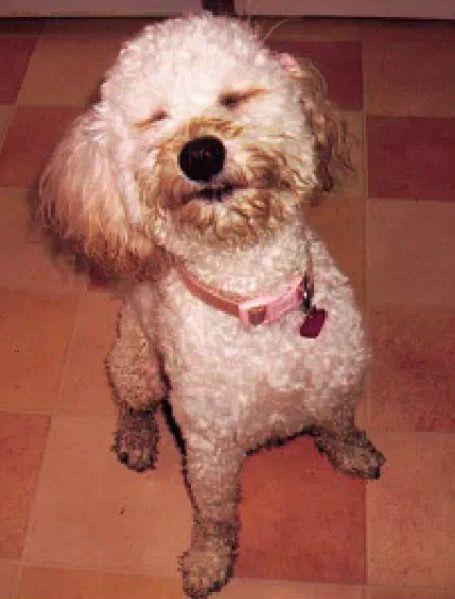Pin By Siena Pisacreta On Cute Animals Cute Animals Dogs Animals