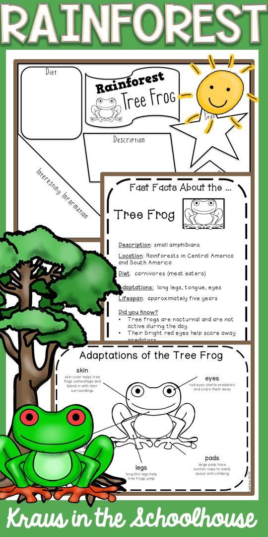 Rainforest Habitat Activities Rainforest activities