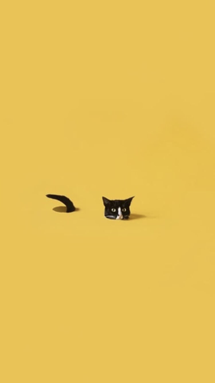 Pin By Kat On Wallpaper Iphone With Images Black Cat Aesthetic Yellow Wallpaper Cat Wallpaper Aesthetic Wallpapers